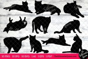 American Shorthair Cat svg
