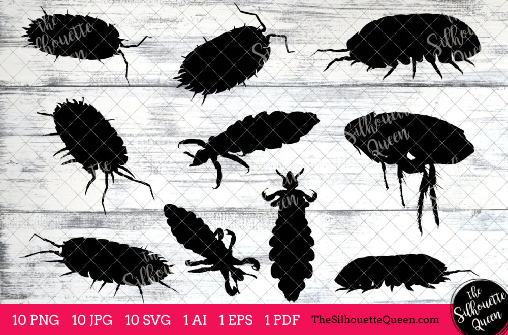 Louse Insect svg