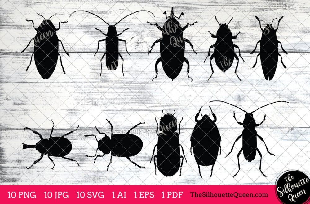 Beetle Insect svg