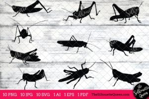 Grasshopper Insect svg
