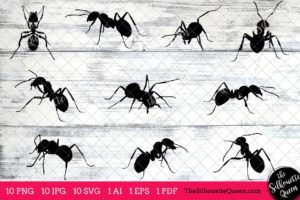 Ant Insect svg