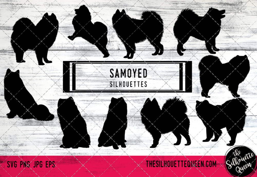 Samoyed dog svg