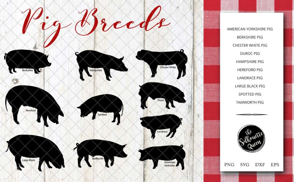 Pig Breeds Silhouette Vector svg file