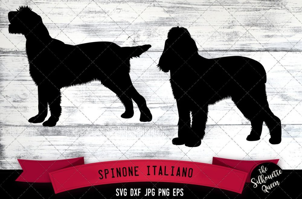 Spinone Italiano SVG Files