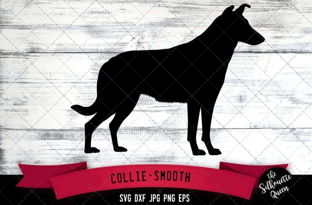 Collie Smooth  SVG Files