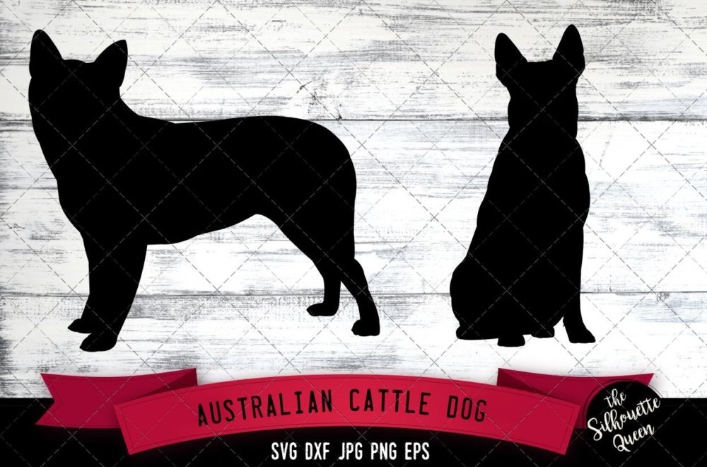 Australian Cattle  SVG Files