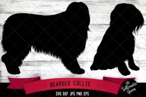 Bearded Collie SVG Files