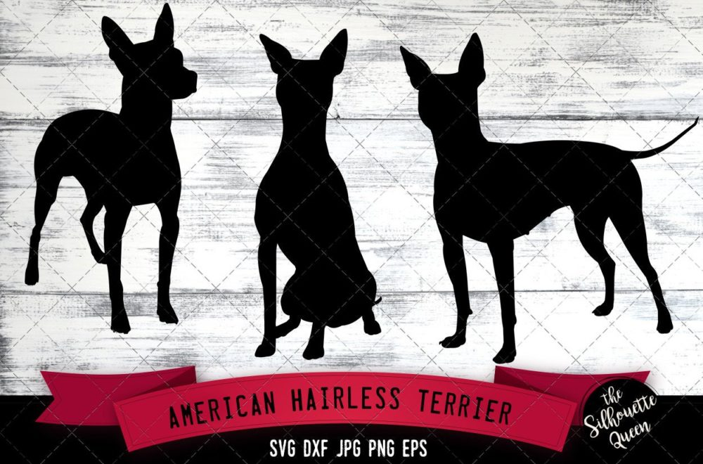 American Hairless Terrier SVG Files