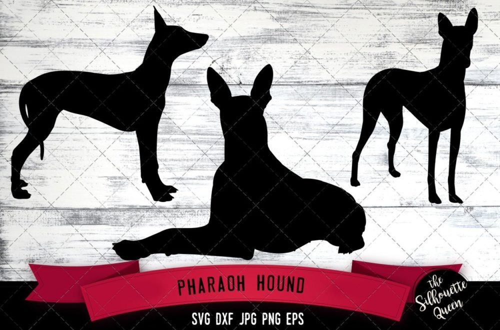 Pharaoh Hound SVG Files