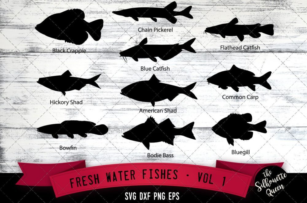 Fresh Water Fishes Svg V1 - Black Crappie