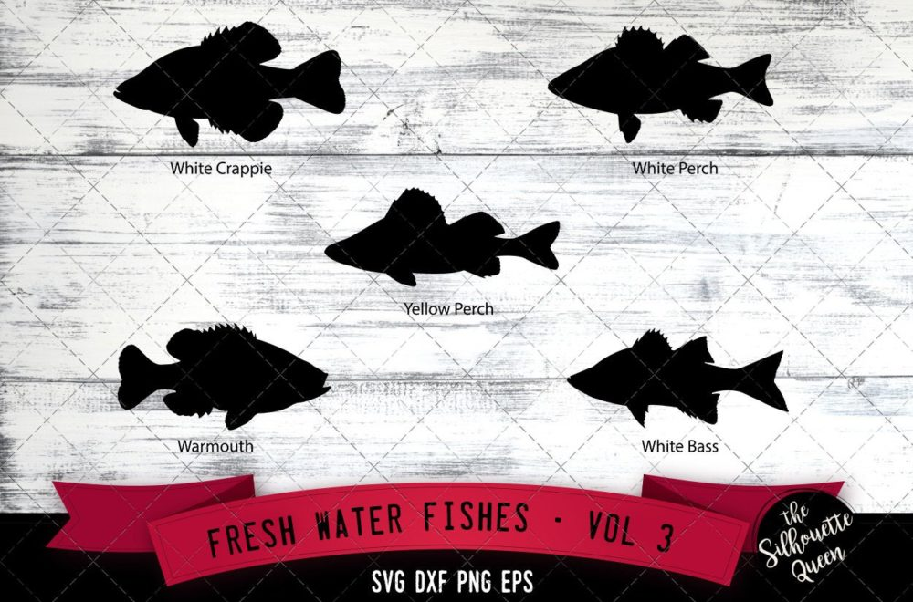 Fresh Water Fishes Svg V3 - White Crappie