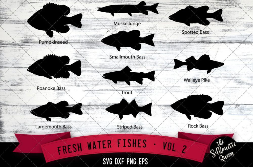 Fresh Water Fishes Svg V2 - Pumpkinseed