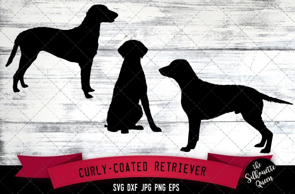 Curly Coated Retriever SVG Files