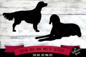 Irish Red White Setter SVG Files