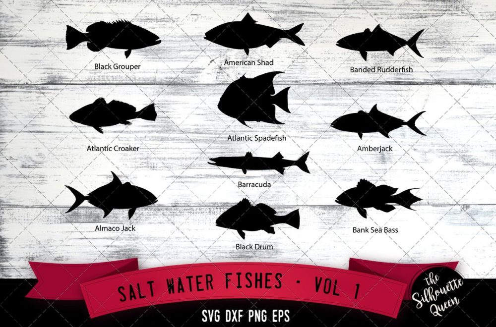 Salt Water Fishes Svg V1 - Black Grouper