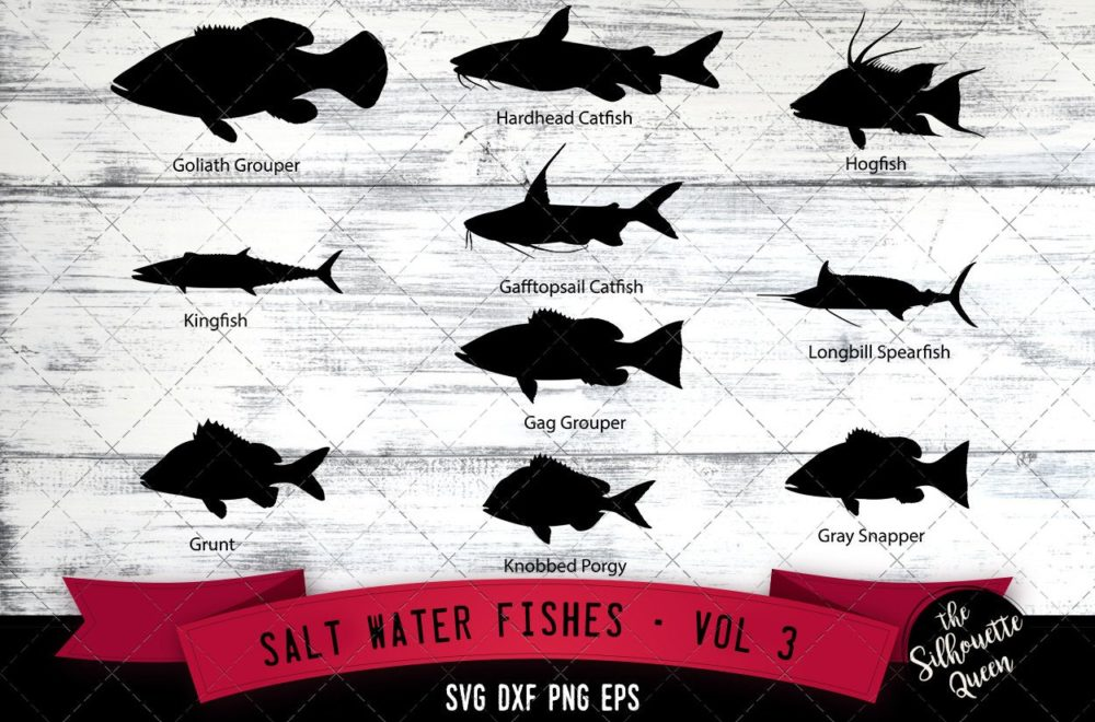 Salt Water Fishes Svg V3 - Goliath Grouper