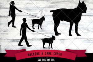 Man Woman Walking a Cane Corso Dog